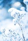 Eisige Blume Stockfotos