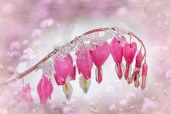 Eisige Blume des blutenden Herzens gestaltet mit Beschaffenheit stockfotos