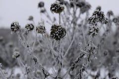 Eisige Blumen an einem kalten Winter-Tag Stockfotos