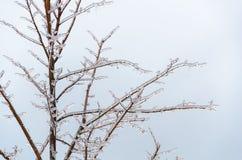 Eisige gefrorene Baumaste Stockbilder