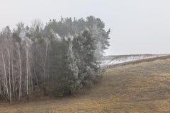 Eisige hügelige Felder der Landschaftsansicht mit Bäumen Stockbilder