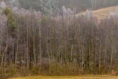 Eisige hügelige Felder der Landschaftsansicht mit Bäumen Stockbild