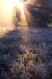 Eisige Herbstzeitwiese und schöner Sonnenaufgang beleuchten Stockfoto