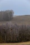 Eisige hügelige Felder der Landschaftsansicht mit Bäumen Lizenzfreies Stockbild
