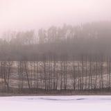 Eisige hügelige Felder der Landschaftsansicht mit Bäumen Lizenzfreies Stockfoto
