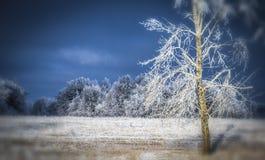 Eisige Landschaft des Winters Stockfotos