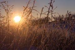 Eisige Morgenlandschaft Lizenzfreie Stockfotografie