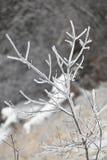 Eisige Niederlassung mit abstraktem Hintergrund Stockfotos