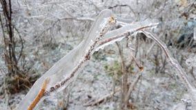 Eisige Niederlassung nach Eisregen im Winter stockfotografie