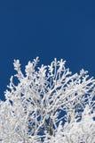 Eisige Niederlassungen auf einem klaren blauen Himmel stockfotografie