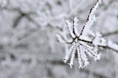 Eisige Niederlassungen des Baums im Winter stockbild