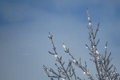 Eisige Niederlassungen, die in der Sonne glänzen stockbilder