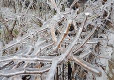 Eisige Niederlassungen nach Eisregen im Winter lizenzfreie stockfotos