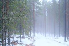 Eisige Straße im Holz Stockbild