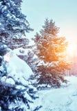 Eisige Winterlandschaft in den schneebedeckten Waldkiefernniederlassungen umfasst mit Schnee im kalten Winterwetter lizenzfreies stockbild