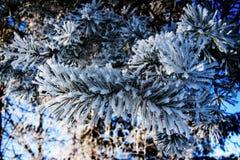 Eisige Winterlandschaft Die Niederlassungen, die mit Schnee und Eis im kalten Winter umfasst werden, verwittern Stockfotos
