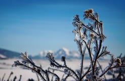 Eisige Winterlandschaft Die Niederlassungen, die mit Schnee und Eis im kalten Winter umfasst werden, verwittern Stockbilder