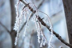 Eisige Winterniederlassung führt die Nahaufnahme einzeln auf, die mit weißem Schnee bedeckt wird Lizenzfreies Stockfoto