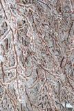 Eisige Zweige Stockfoto