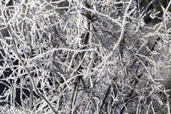 Eisige Zweige stockfotografie