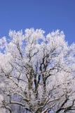 Eisiger Baum Stockbild