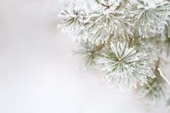 Eisiger Baum Stockfotos