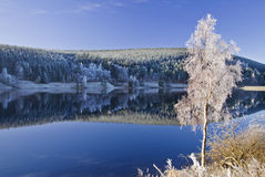 Eisiger Baum Stockfoto