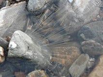 Eisiger Fluss in Perthshire während eines klaren Wintertages Stockfotografie