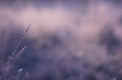 Eisiger Gras-Hintergrund Stockfotos