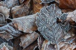Eisiger Herbstlaubhintergrund Stockbild