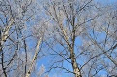 Eisiger Himmel Lizenzfreie Stockbilder