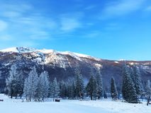 Eisiger Kanas-Wald im Winter Stockbilder