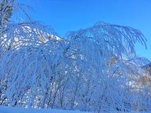 Eisiger Kanas-Wald im Winter Lizenzfreies Stockbild