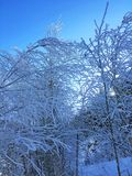 Eisiger Kanas-Wald im Winter Stockfoto