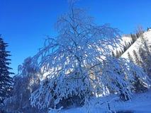 Eisiger Kanas-Wald im Winter Lizenzfreie Stockfotografie