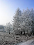 Eisiger Morgen Stockfotografie