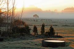 Eisiger Morgen auf Bauernhof Lizenzfreies Stockbild