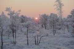 Eisiger Morgen an der Waldlandschaft mit den gefrorenen Anlagen, den Bäumen und Wasser Lizenzfreies Stockbild