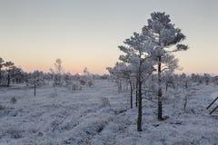 Eisiger Morgen an der Waldlandschaft mit den gefrorenen Anlagen, den Bäumen und Wasser Stockbild