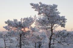 Eisiger Morgen an der Waldlandschaft mit den gefrorenen Anlagen, den Bäumen und Wasser Stockfotos