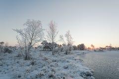 Eisiger Morgen an der Waldlandschaft mit den gefrorenen Anlagen, den Bäumen und Wasser Lizenzfreie Stockfotografie