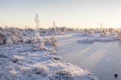 Eisiger Morgen an der Waldlandschaft mit den gefrorenen Anlagen, den Bäumen und Wasser Lizenzfreies Stockfoto