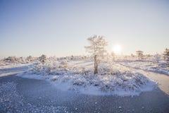 Eisiger Morgen an der Waldlandschaft mit den gefrorenen Anlagen, den Bäumen und Wasser Lizenzfreie Stockfotos
