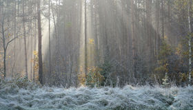 Eisiger Morgen des Herbstes Stockfotografie