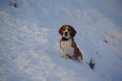 Eisiger Morgen und Hund des Winters gehen auf die schneebedeckte Flussbank Lizenzfreie Stockfotos