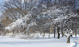Eisiger Park stockfotos