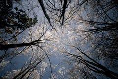 Eisiger Sonnenaufgang Stockfotos