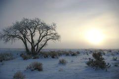 Eisiger Sonnenaufgang stockfoto