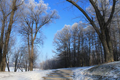 Eisiger Tag Stockfoto