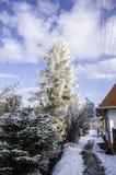 Eisiger Tag, in dem alles frostbitten ist und der Himmel ist klar Stockfotografie